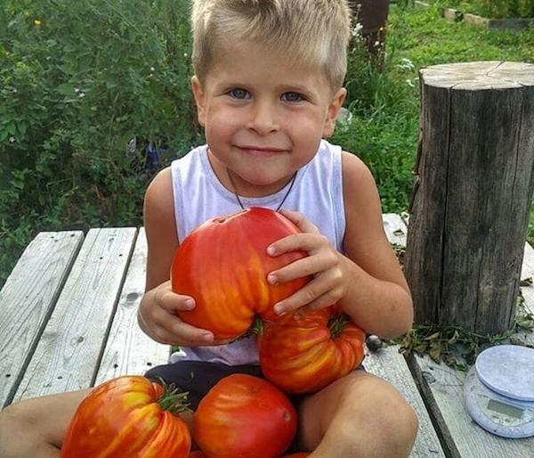 Мой томатный сезон не заканчивается никогда!