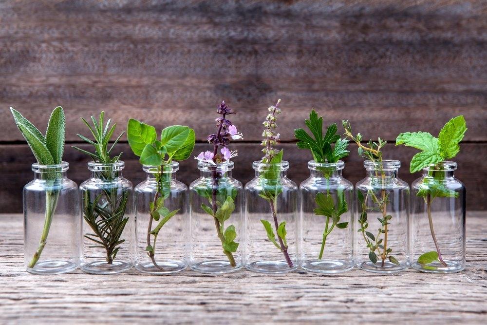 Какие цветы и овощи можно вырастить в вазе с водой?