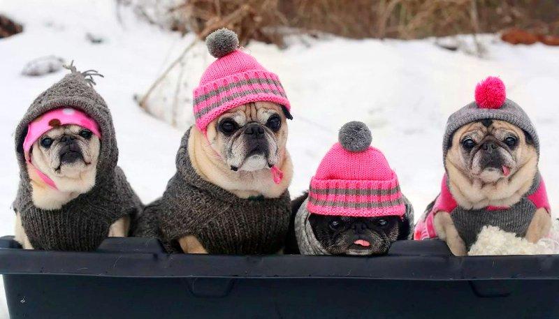 Вязаная одежда для собачек (выкройки и схемы вязания)