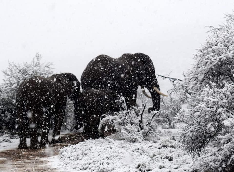 В Африке выпал снег