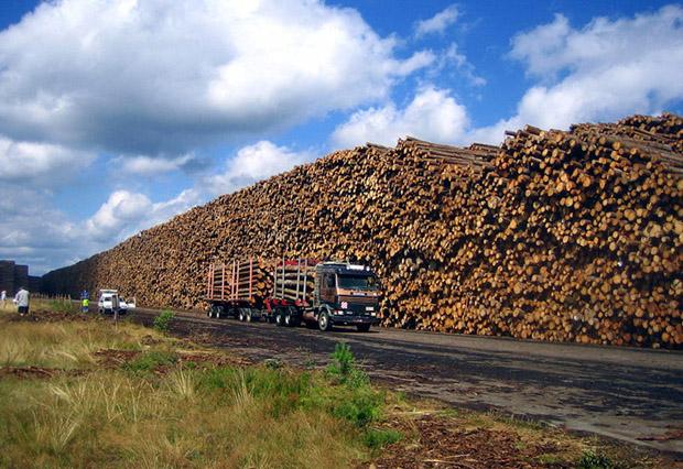 Гигантское хранилище поваленного леса