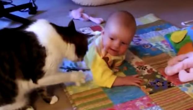 Кошка развлекает малыша