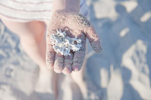 Целебные свойства белого коралла