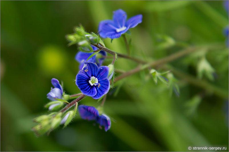 Луговые цветы подмосковья фото