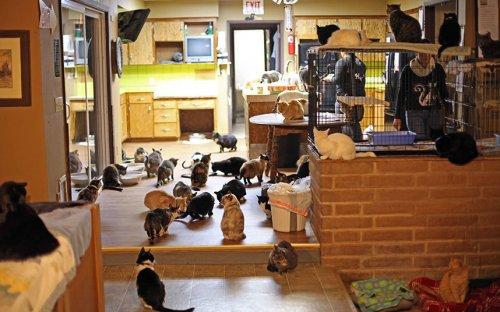 Линеа Латтанцио: женщина, в доме которой живёт более 1000 кошек