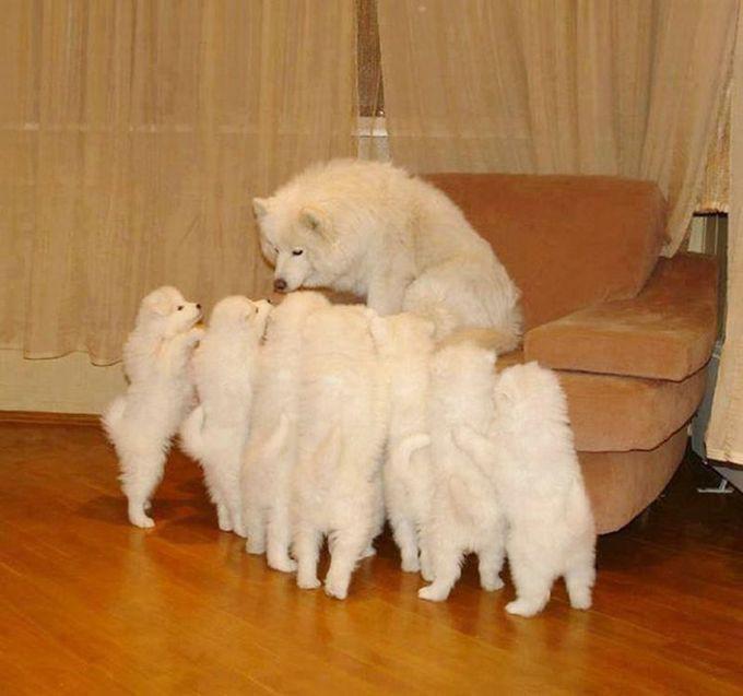 7. Как под копирку животные, потомство, собаки