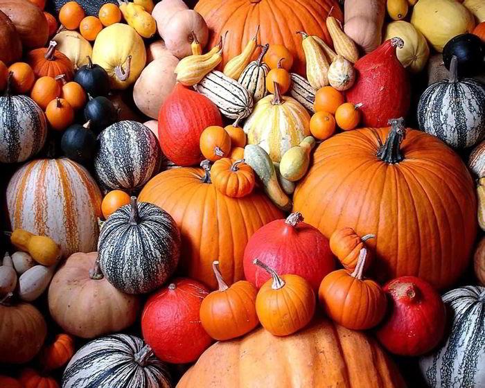Жду осень ради сочной тыквы:…