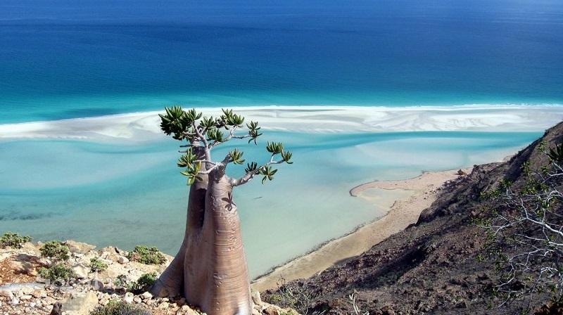 Сокотра — остров, отколовшийся от другой планеты