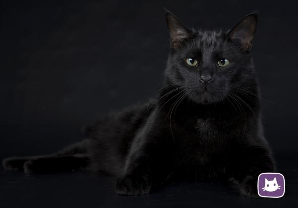 Приметы, связанные с кошками. Часть 1: черный кот ♠🐾