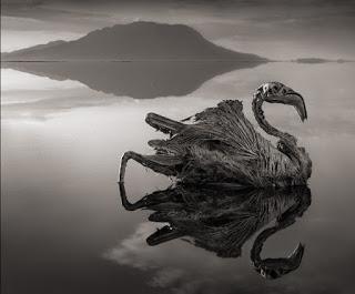 Смертельное озеро в Танзании…