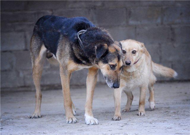 Счастливы вместе: влюбленные собаки четвертый год ищут дом.