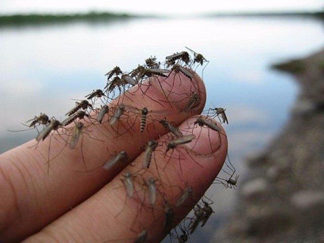 Действенное средство от комаров