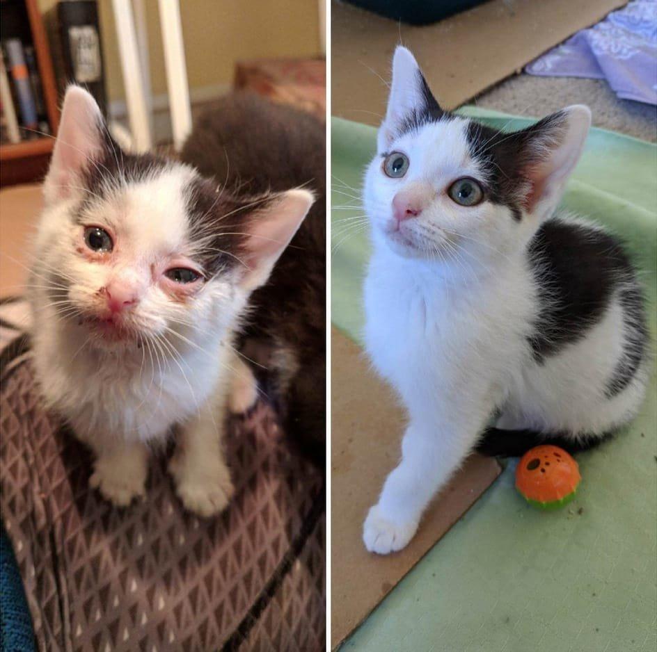 Домашние животные до и после…