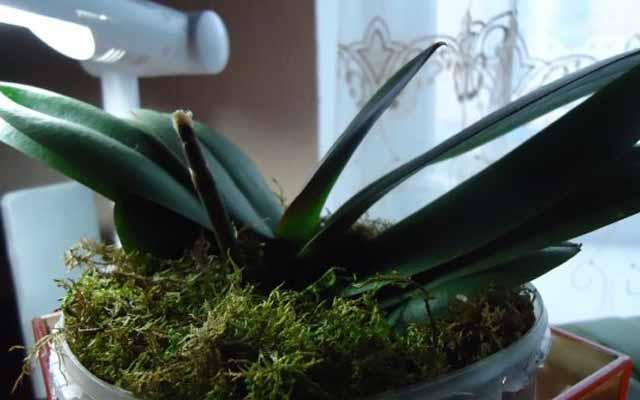 plants0115-15.jpg