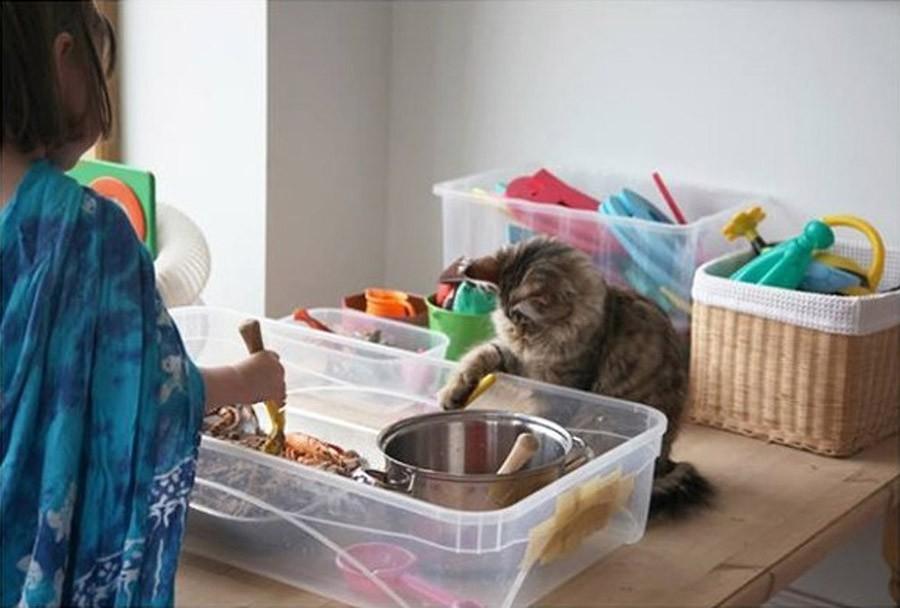 IrisandThula14 Как кошка Тула помогает девочке с аутизмом