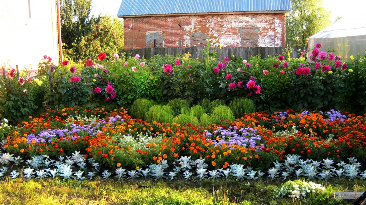 Многолетние цветы для Урала и Сибири (55 фото. - m) 91