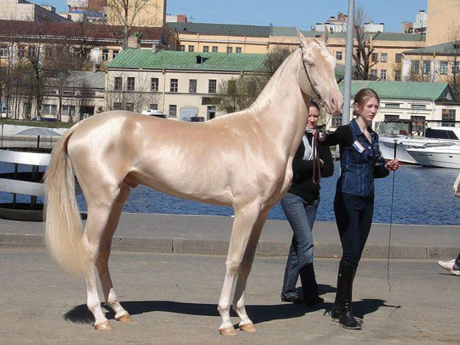 Редкие масти лошадей
