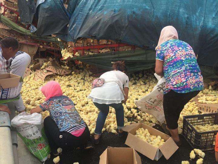 В Китае опрокинулся грузовик с цыплятами…