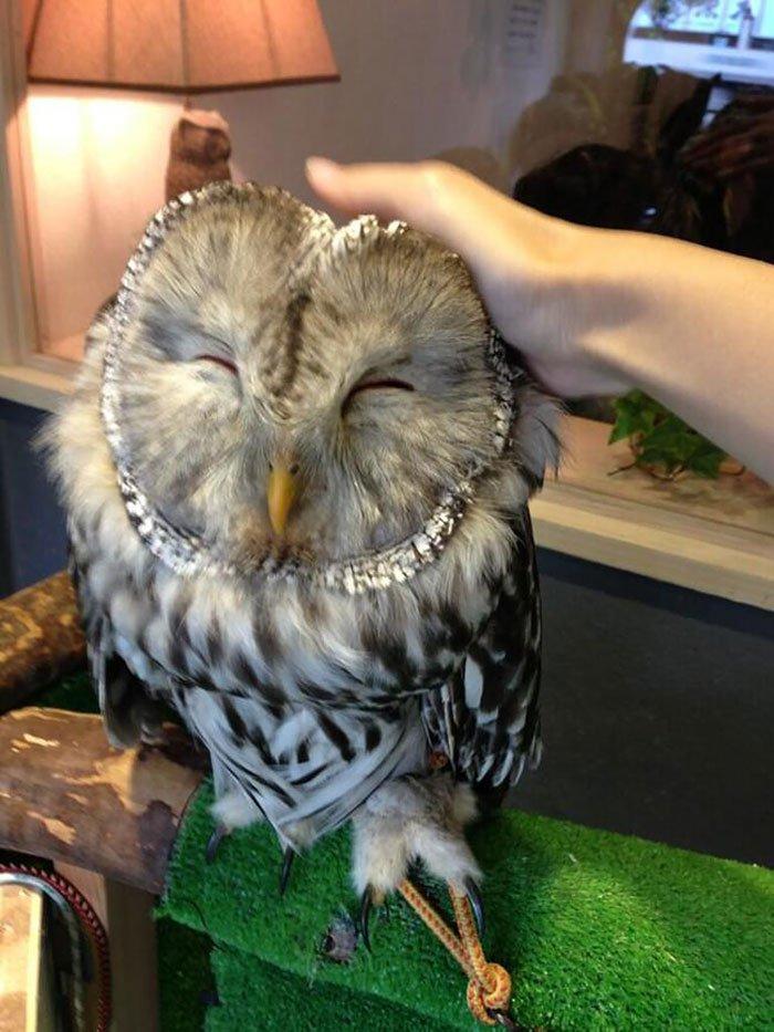 В Лондоне откроется «совиный» бар для сбора средств в защиту сов