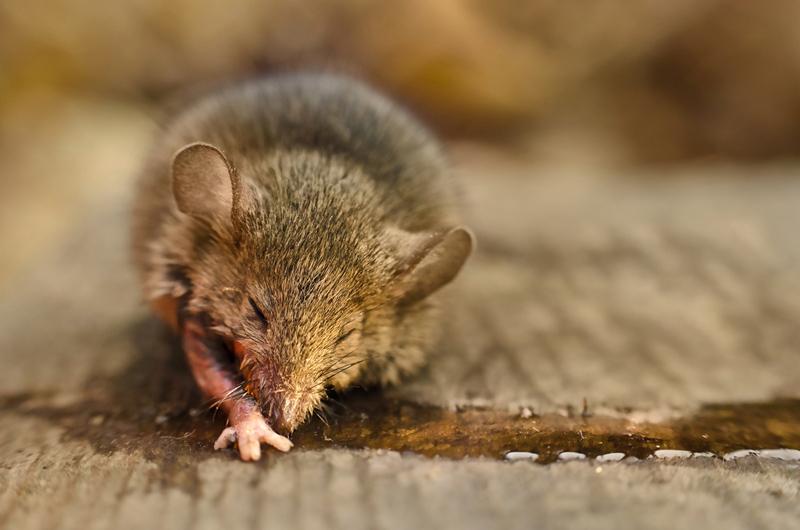 9 паразитов, которые меняют поведение хозяина