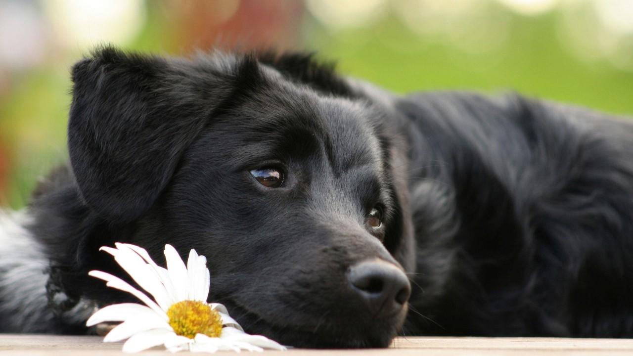 9 вещей о собаках, которые вы могли не знать интересное, собака, факты