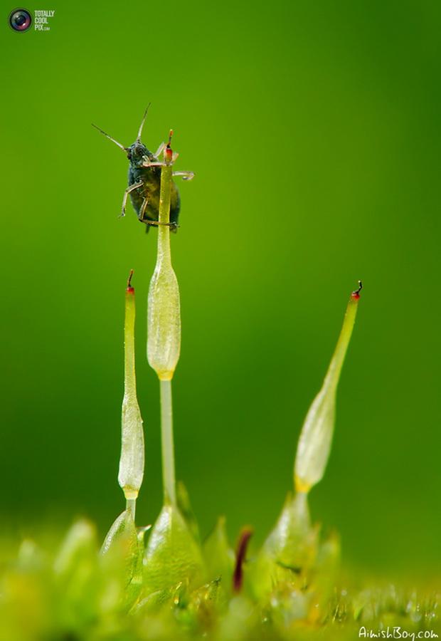 aimishboy 016 Удивительная макрофотография: неожиданно гламурные насекомые и многое другое