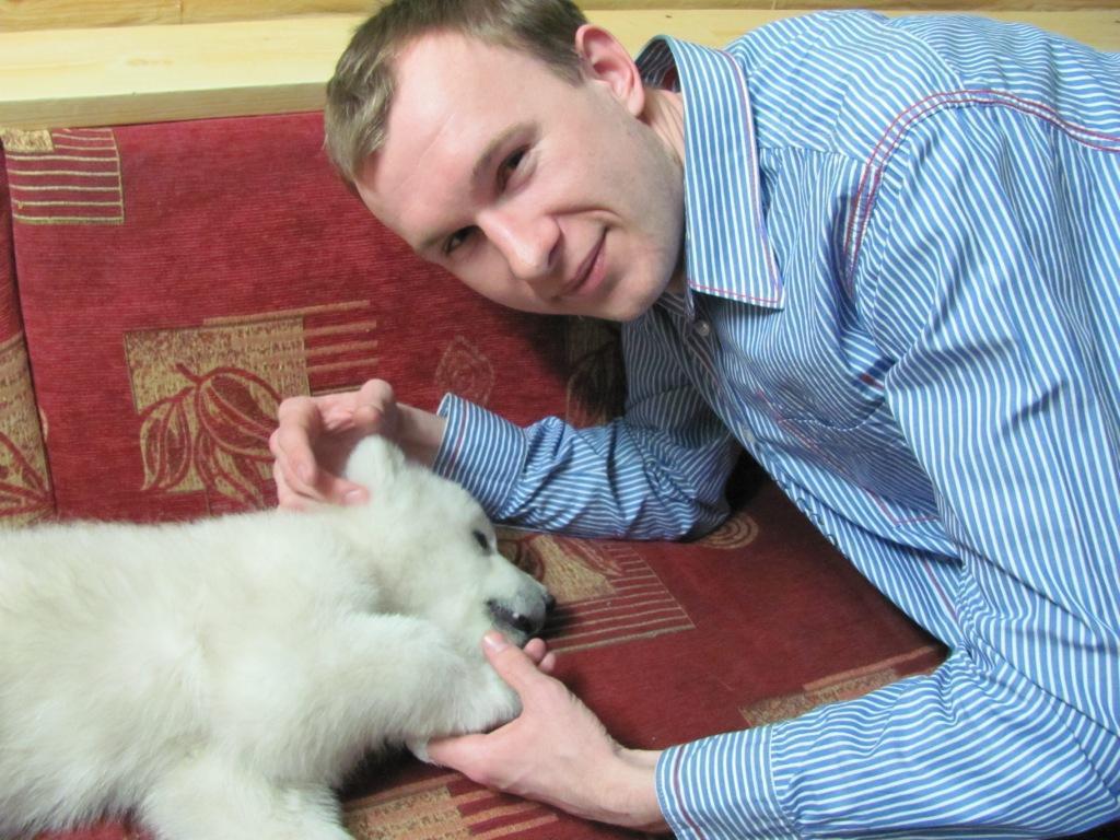 Спасение медвежонка wwf, белый медведь, детки, животные, звери, зверята, малыши, медведи, медвежонок, мимими