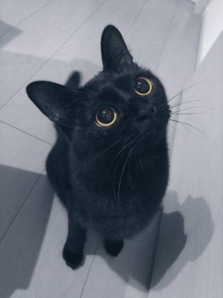 Что скажет о кошке её окрас!