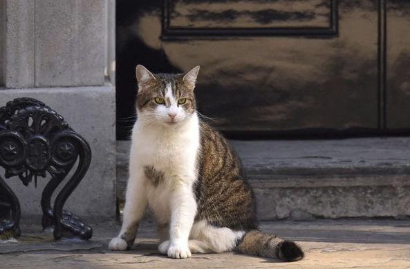 Кот с Даунинг-стрит прервал прямой эфир, чтобы ему открыли дверь