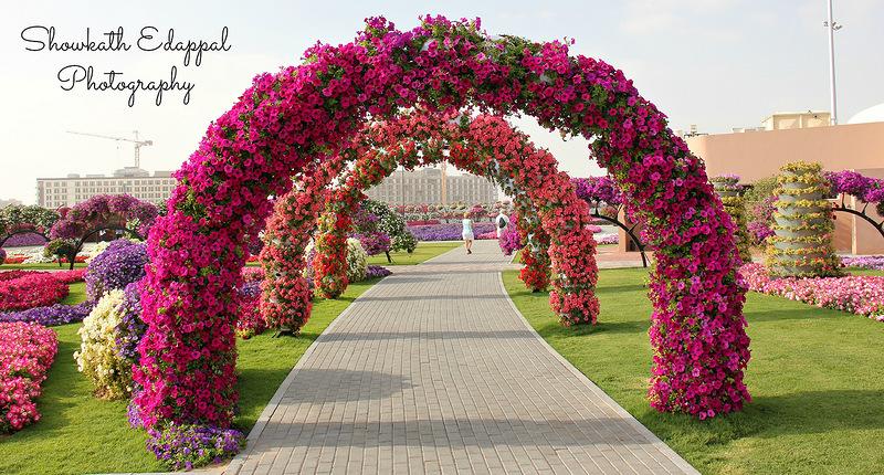 Фото красивых арок из цветов