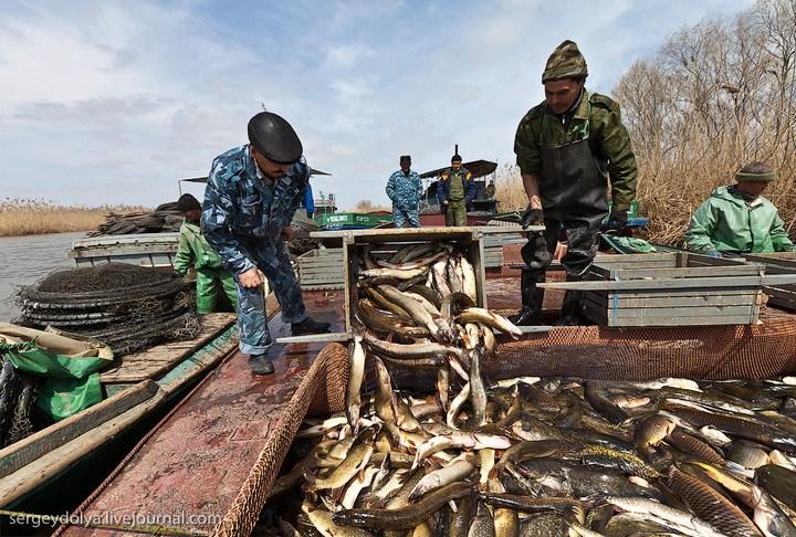профессиональная ловля рыбы