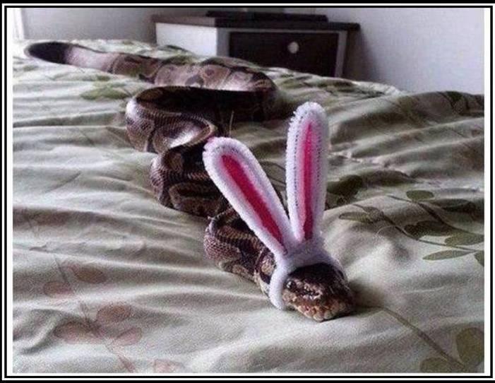 Змеиное знакомство......