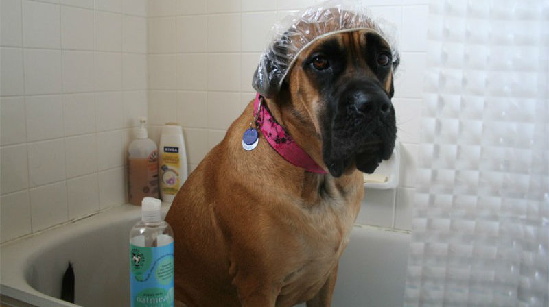Полезные лайфхаки для владельцев собак