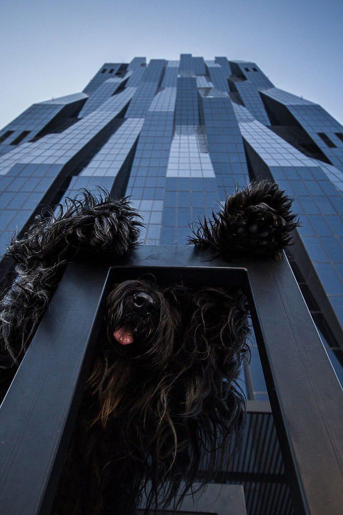 20 фотографий, на которых собаки выглядят настоящими гигантами