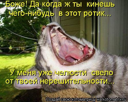 Котоматрица: Боже! Да когда ж ты  кинешь  чего-нибудь  в этот ротик….. У меня уже челюсти  свело от твоей нерешительности…..