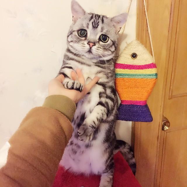 Свежий претендент на звание самого грустного котика на свете