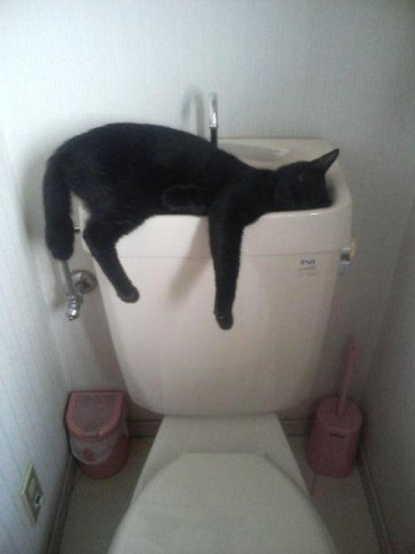 sleepingcats29 Коты, познавшие науку сна