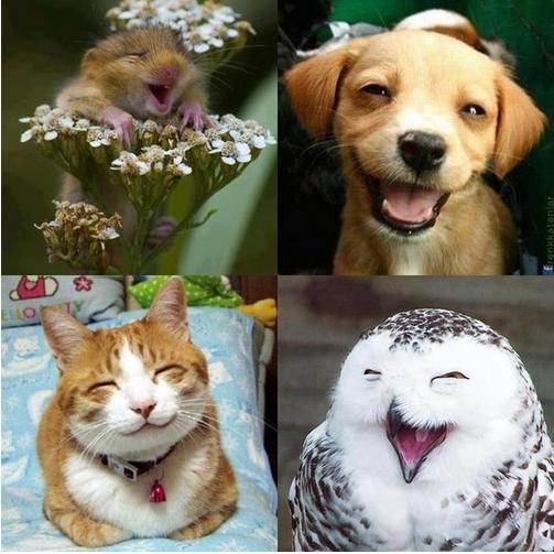 Мир дикой природы. Животные Факты Фото Картинки.