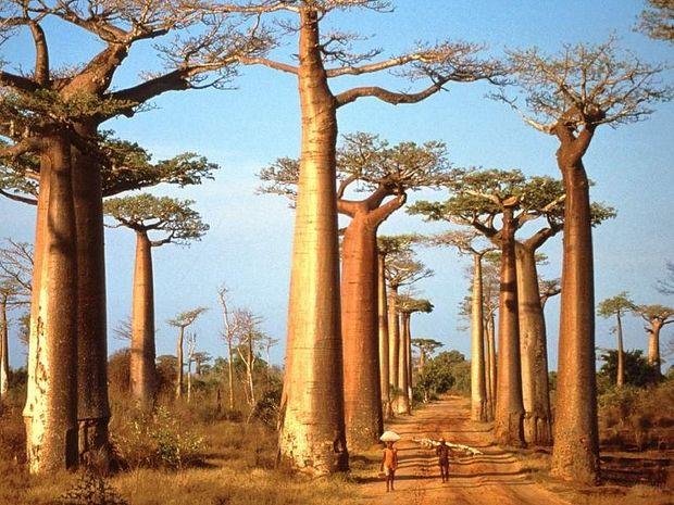 необычные деревья-8