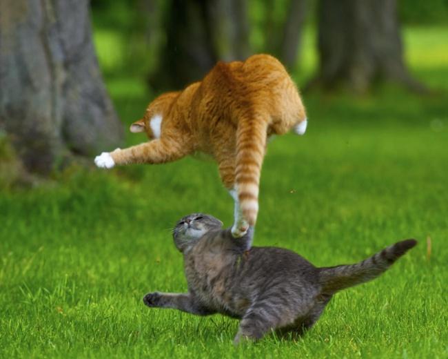 10 доказательств того, что коты умеют летать