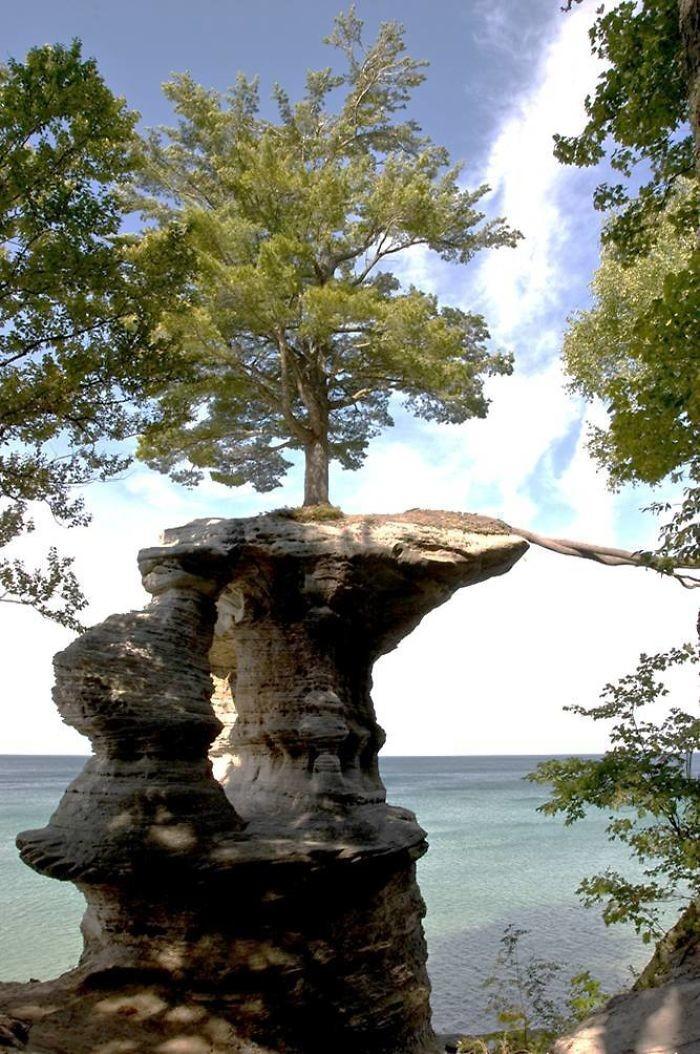 Корни спустились за питательными веществами дерево, живучесть, жизнь, мир, планета, растительность, фото