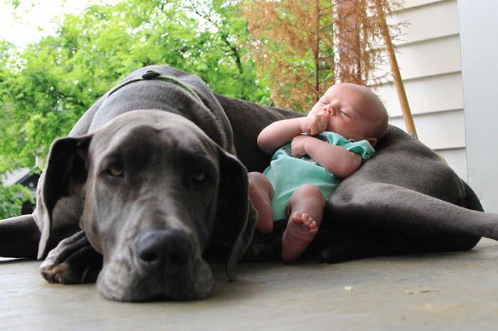Это мой малыш  дружба, ребенок, собака