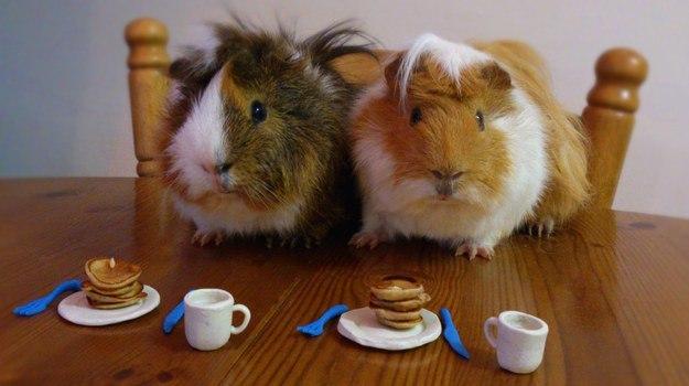 5. Романтический завтрак на двоих животные, позитив