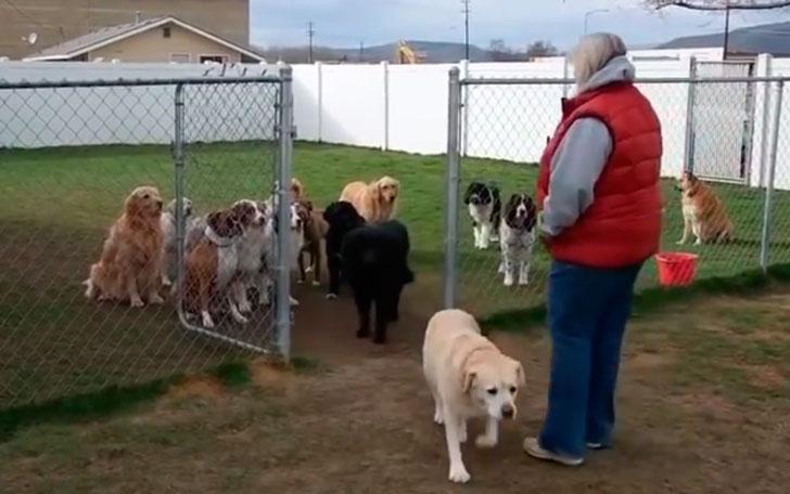 Крутая перекличка собак… А к…
