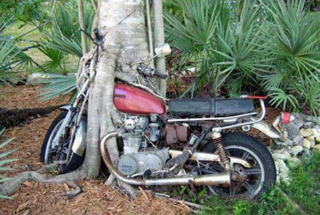 Легенда гласит, что этот мотоцикл был найден в Шри-Ланке, после долгой войны в 3 десятилетия заброшенное, природа, разрушение, цивилизация