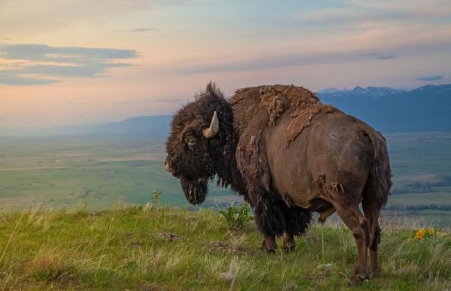 Зверские шедевры National Geographic