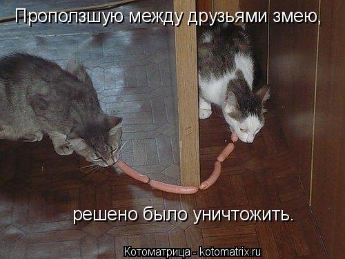 Котоматрица: Проползшую между друзьями змею, решено было уничтожить.