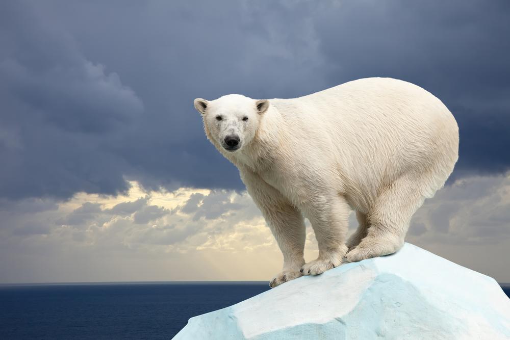 Глобальное потепление: кто выживет?