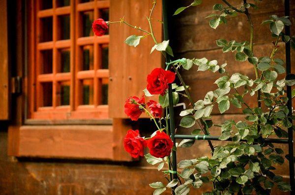Окна прикрывают деревянные ставни