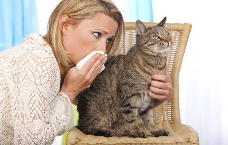 Сюрприз для кошки-пакостницы